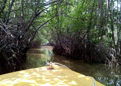 Pichavaram Mangrove Forest Indias Second Largest Mangrove Forest (10)