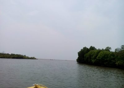 Pichavaram Mangrove Forest Indias Second Largest Mangrove Forest (11)