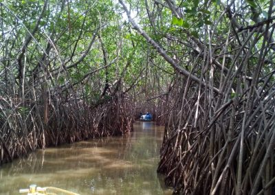 Pichavaram Mangrove Forest Indias Second Largest Mangrove Forest (13)