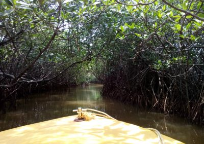 Pichavaram Mangrove Forest Indias Second Largest Mangrove Forest (15)