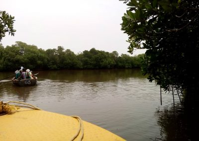 Pichavaram Mangrove Forest Indias Second Largest Mangrove Forest (2)