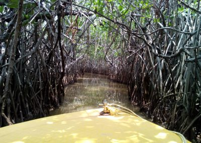 Pichavaram Mangrove Forest Indias Second Largest Mangrove Forest (33)
