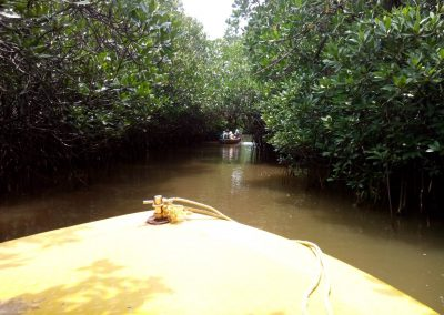 Pichavaram Mangrove Forest Indias Second Largest Mangrove Forest (39)