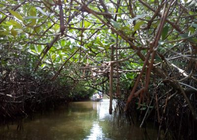 Pichavaram Mangrove Forest Indias Second Largest Mangrove Forest (46)
