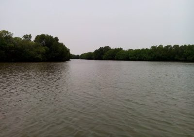 Pichavaram Mangrove Forest Indias Second Largest Mangrove Forest (6)