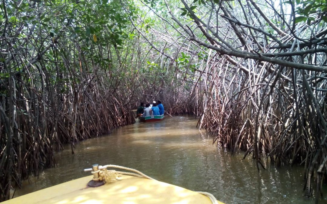 Pichavaram Mangrove Forest India's Second Largest Mangrove Forest