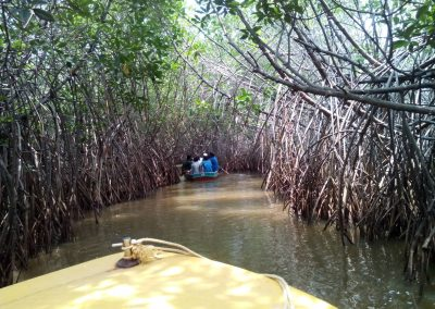 Pichavaram Mangrove Forest Indias Second Largest Mangrove Forest (8)